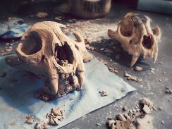 Mountain Lion Skull Cermanics